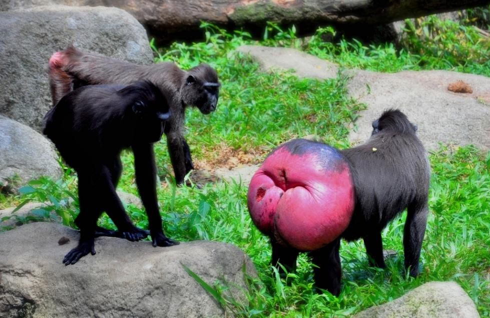 05-Macaques-Schristia-Flickr