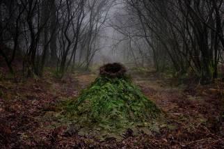 Ellie Davies Another-Green-World_2