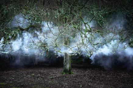 Ellie Davies Between-the-Trees-11-2014