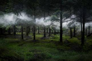 Ellie Davies Between-the-Trees-3-2014