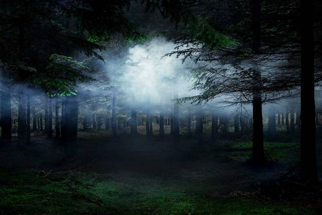 Ellie Davies Between-the-Trees-4-