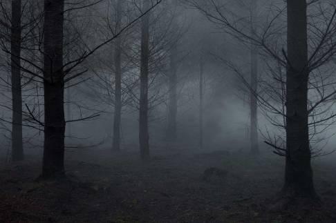 Ellie Davies Between-The-Trees-Tryptic_3-